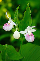 """Minnesota Royalty""<br />