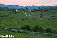 0511-0902  Cows (Cattle) Grazing in Pasture in Blue Ridge Mountains in Virginia  © David Kuhn/Dwight Kuhn Photography