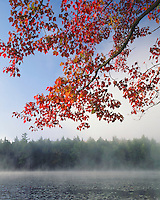 Foggy sunrise on Middle Pond in the St. Regis Canoe Area; Adirondack Park and Preserve, NY