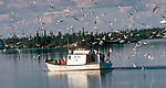 Gulls follow commercial fishing boat on Great Slave Lake.