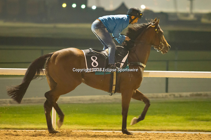DUBAI,UNITED ARAB EMIRATES-MARCH 29: Illustrious Lad,trained by Peter Gelagotis,exercises in preparation for the Al Quoz Sprint at Meydan Racecourse on March 29,2018 in Dubai,United Arab Emirates (Photo by Kaz Ishida/Eclipse Sportswire/Getty Images)