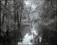 """""""Reclamation""""<br /> Wabash & Erie Canal<br /> Delphi, Indiana<br />  2009<br /> <br /> Mother Nature is slowly reclaiming her lands along the Wabash and Erie Canal near the Wabash River in Delphi, Indiana.  Once again the Hoosier land is filled with trees and undergrowth that it once held before the development of the canal in 1839.<br /> <br /> 4 x 5 Large Format Film"""