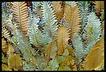 Ferns, Queensland, Australia