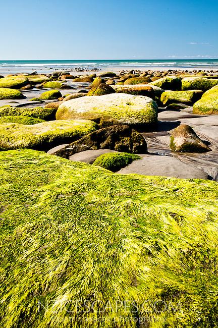 Moss covered rocks on Carters Beach in Westport - Buller Region, Central West Coast, New Zealand