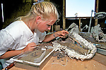 Alexis Walker Working On Triceratops Bones