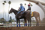 October 26, 2014: V.E. Day exercises in preparation for the Breeders' Cup Classic at Santa Anita Park in Arcadia, California on October 26, 2014. Zoe Metz/ESW/CSM