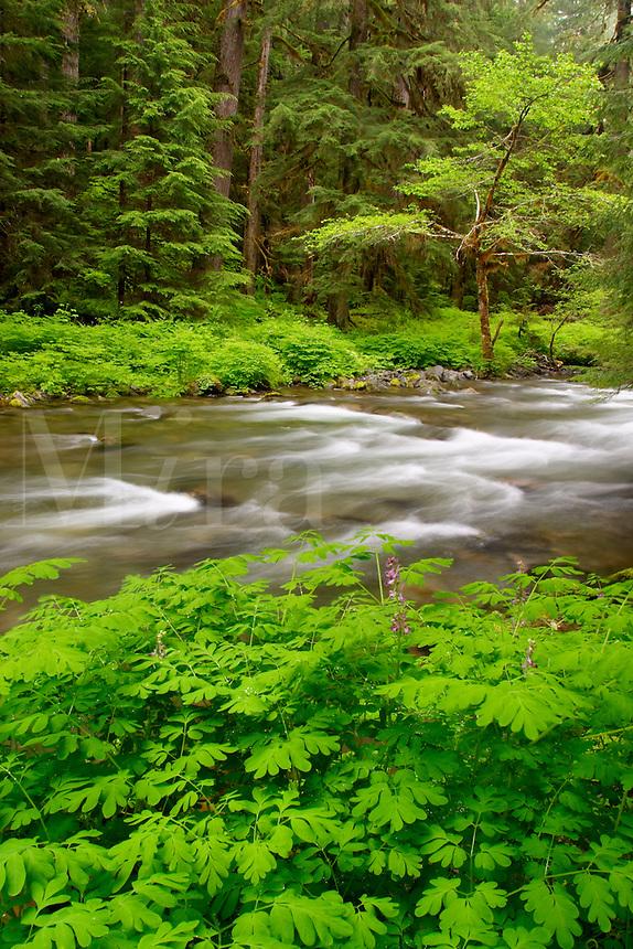 Soleduck River, Olympic National Park, Olympic Peninsula, Clallam County, Washington, USA