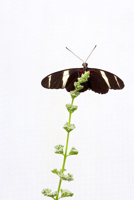 Unidentified butterfly at Portland Zoo butterfly garden.  Oregon