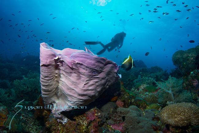 Diver on the Reef, Cogon Secret, VIsayas Archipelago, Php