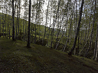 FOREST_LOCATION_90063