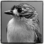 Instagram Birds