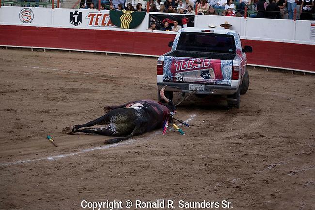 Truck drags dead bull