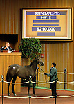 September 14, 2015: Hip 2 Candy Ride (ARG) - Unbridled Beauty filly consigned by Ashview Farm.  Candice Chavez/ESW/CSM