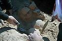 Iraq 2010 <br />The Barzani 's mass graves in the desert of Busaya, near the Saudi border: the skulls of the Barzani victims  <br />Irak 2010  <br />Le charnier des hommes Barzani éxécutés dans le desert de Busaya, pres de la frontiere seoudienne