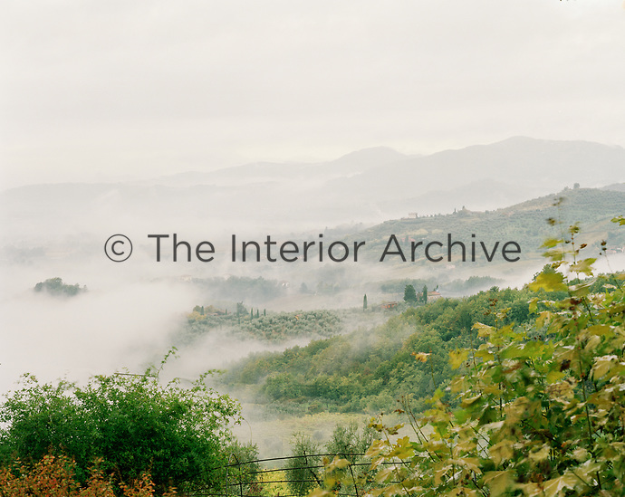 Early morning mist envelops the hillside vineyard of the Tenuta di Valgiano estate in Lucca, northern Tuscany, Italy.