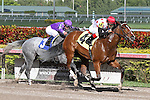 West Coast Girl (KY) with jockey John Velazquez on board breaks her maiden for 3 year old fillies at Gulfstream Park. Hallandale Beach, Florida  02-01-2014