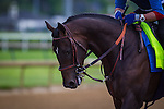 LOUISVILLE, KY - MAY 04: Mor Spirit jogs in preparation for the Kentucky Derby at Churchill Downs on May 04, 2016 in Louisville, Kentucky. (Photo by Zoe Metz/Eclipse Sportswire/Getty Images)