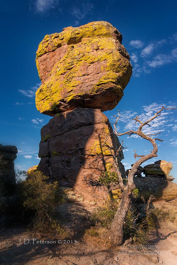 Rhyolite and Lichen, Chiricahua National Monument, Arizona