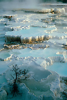 78 Spring<br /> Mammoth Hot Springs<br /> Yellowstone National Park<br /> Rocky Mountains,  Wyoming