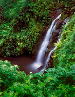 Small waterfall near Hana, Maui, Hawaii. White blooming flower is Crepe Ginger.