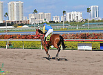 06 February 2010:  Maximoso with jockey manuel Aguilar in the Fifth race at Gulfstream Park in Hallandale Beach, FL.