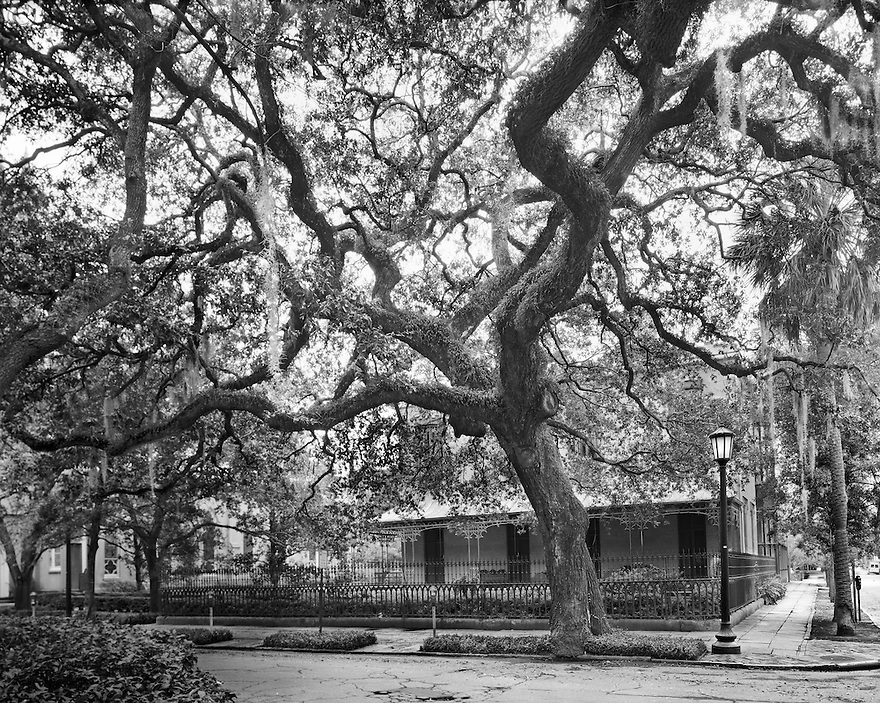 """Madison Square Tree""<br />