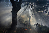 The firefighters from the BRICA, the Andalusian Service firefighting (INFOCA), work through the smoke during a forest fire in Los Barrios, near Cadiz on July 25, 2015. Since July 19 wildfires have ravaged nearly 39,000 hectares of land in Spain, according to the provisional figures from the agriculture ministry. © Pedro ARMESTRE