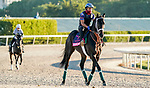 January 20, 2021: Kiss Today Goodbye exercises as horses prepare for the 2021 Pegasus World Cup Invitational at Gulfstream Park in Hallandale Beach, Florida. Scott Serio/Eclipse Sportswire/CSM