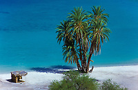 Palms at a white sand beach with turquoise water in Baja California