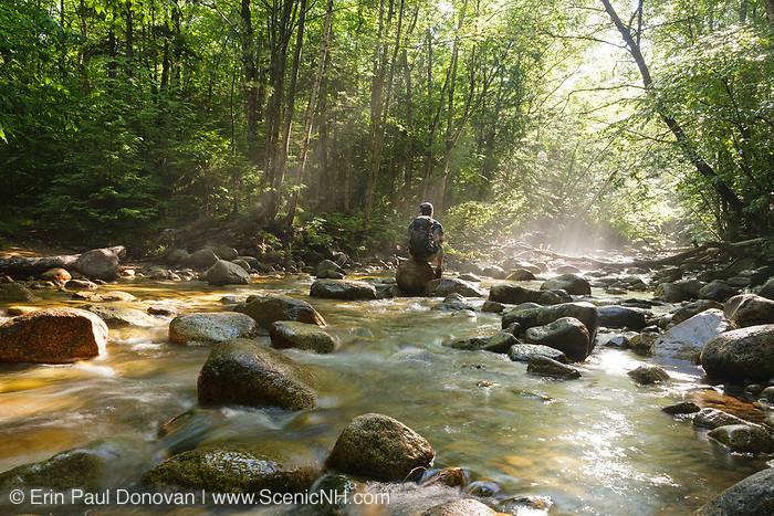 """Hiker sitting on rock in morning fog along Cedar Brook during the summer months in the 45,000-acre federally designated """"Pemigewasset Wilderness"""" in Lincoln, New Hampshire USA. This area was logged during the East Branch & Lincoln Railroad (1893-1948)."""