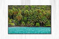 Maho Bay Palms<br /> St. John<br /> Virgin Islands
