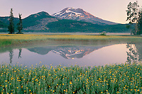 Leafy arnica<br />