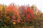 Fall foliage, Maine
