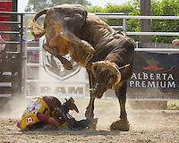 Rodeo Milverton, 2011