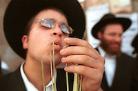 """An ultra-Orthodox Jewish man inspects the tips of a Lulav, palm branches used during the upcoming Sukkot festival, September 30, 2001 in Jerusalem's Mea Shearim neighborhood. The 8-day festival, known in English as the """"Feast of the Tabernacles,"""" commemorates the ancient Hebrews' 40 years of wandering in the desert after their exodus from Egypt thousands of years ago. Photo by Quique Kierszenbaum"""