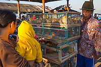 Jimbaran, Bali, Indonesia.  Man Selling Baby Multicolored Chicks as Pets for Children.