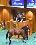 Hip no. 38, a Bodemeister colt out of Awesome Humor, is sold at the Fasig-Tipton Yearling Sales for $500,000 to Al Shaqab Racing on August 10, 2015 at the Fasig-Tipton Sales Pavilion in Saratoga Springs, New York. (Bob Mayberger/Eclipse Sportswire)