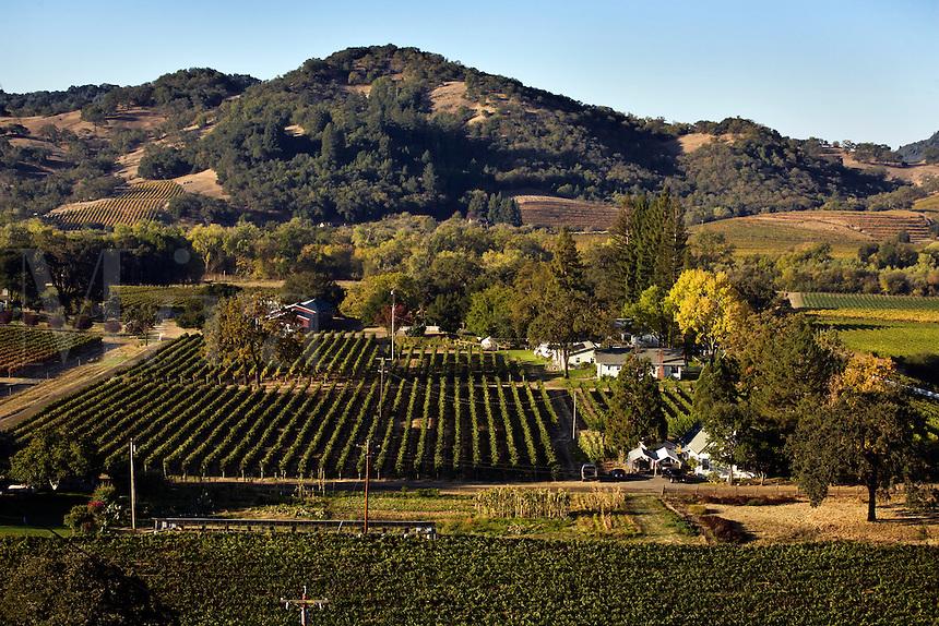 REDWOOD RANCH VINEYARDS in the heart of the ALEXANDER VALLEY - HEALDSBURG,  CALIFORNIA