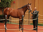 Hip #69 Tiznow - Clear Mandate at the Keeneland September Yearling Sale.  September 10, 2012.