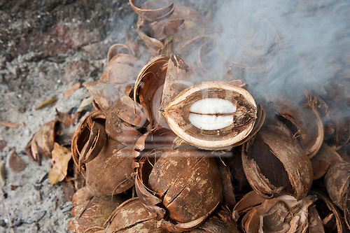 Aldeia Baú, Para State, Brazil. Babassu nuts cut open to show the kernel.