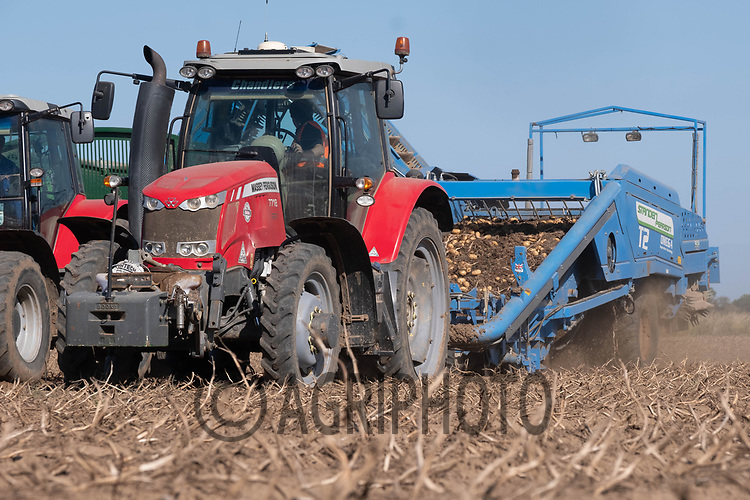 2-9-2021 Harvesting potatoes in the Lincolnshire fens <br /> ©Tim Scrivener Photographer 07850 303986<br />      ....Covering Agriculture In The UK....