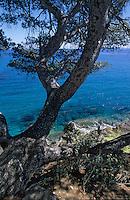 Europe/Provence-Alpes-Côte d'Azur/83/Var/Rayol-Canadel-sur-Mer: Domaine du Rayol - Jardin appartenant au Conservatoire du Littoral - La côte rocheuse à la pointe du Figuier
