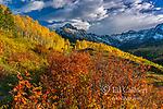 Aspen, Mount Sneffels, Dallas Divide, Uncompahgre National Forest, Colorado