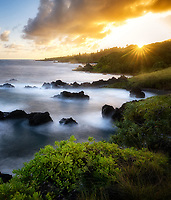 Coast and Naupaka plant  at sunset off area in front of Venus Pool. Maui, Hawaii