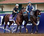 DEL MAR, CA - NOVEMBER 01: Battle of Midway, owned by Don Alberto Stable, & WinStar Farm, LLC and trained by Jerry Hollendorfer, exercises in preparation for the Breeders' Cup Las Vegas Dirt Mile at Del Mar Thoroughbred Club on November 1, 2017 in Del Mar, California. (Photo by Kazushi Ishida/Eclipse Sportswire/Breeders Cup)