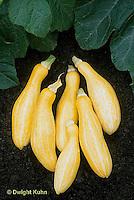 HS36-044x  Summer Squash - yellow
