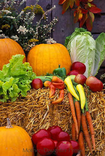 Fall vegetables on display at farmers market, Vermont