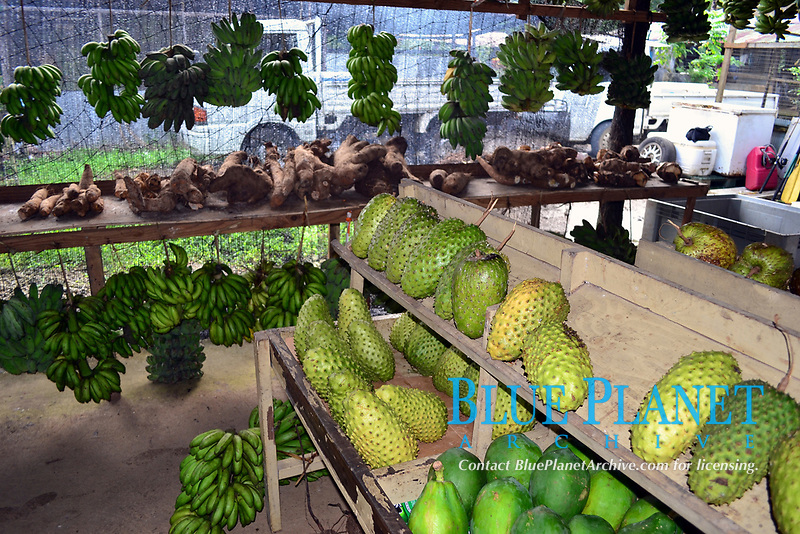 Locally grown vegetables and fruits, Local market, Pohnpei, Federated States of Micronesia