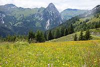 Bergwiese, Blumenwiese, Alm, Almwiese, Alpen, alpine pasture, mountain pastures, mountain pasture, Jakoberalm, etwa 1.850 m Höhe, Schlierer Alm, Naturpark Riedingtal, Zedernhaus, Lungau, Niedere Tauern, Biosphärenpark Salzburger Lungau, Österreich, Austria, Salzburg