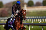 November 2, 2020: Midnight Sands, trained by trainer Brendan P. Walsh, exercises in preparation for the Breeders' Cup Dirt Mile at Keeneland Racetrack in Lexington, Kentucky on November 2, 2020. Alex Evers/Eclipse Sportswire/Breeders Cup